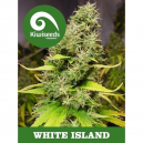 White Island Kiwi Seeds