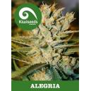 Alegria Kiwi Seeds