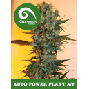 Auto Power Plant Kiwi Seeds