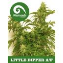 Little Dipper Kiwi Seeds