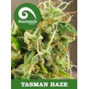 Tasman Haze Kiwi Seeds