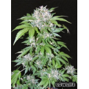 Auto Ak74 Low Life Seeds