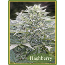 Hashberry Mandala Seeds