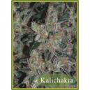 Kalichakra Mandala Seeds