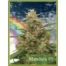 Mandala 1 Mandala Seeds