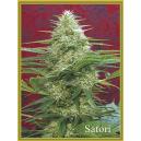 Satori Mandala Seeds