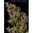Purple Paro Valley Mandala Seeds