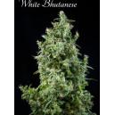 White Buthanese Mandala Seeds