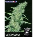 Somango 47 Positronics Seeds