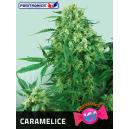 Caramelice Positronics Seeds