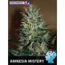 Amnesia Mistery Positronics Seeds