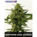 Northern Haze Express