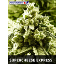 Supercheese Express Positronics Seeds