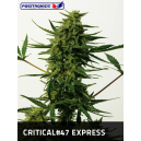 Critical 47 Positronics Seeds