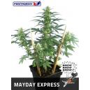 Mayday Express Positronics Seeds