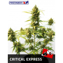 Critical Express Positronics Seeds