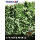 Afghan Express Positronics Seeds