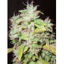 Sour P Resin Seeds