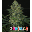 Criminal + Ripper Seeds