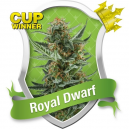 Royal Dwarf Royal Queen Seeds