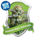 Amnesia Haze Auto Royal Queen Seeds
