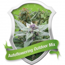 Autoflowering Outdoor Mix Royal Queen Seeds
