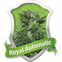 Royal Automatic Royal Queen Seeds