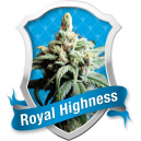 Royal Highness Medicinal Royal Queen Seeds