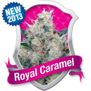 Royal Caramel Royal Queen Seeds