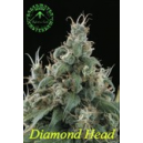 Diamond Head Sagarmatha Seeds