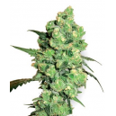 Super Skunk Fem White Label Seed Company