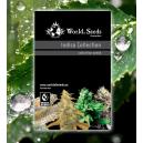 Indica Collection 20 Semillas Regulares