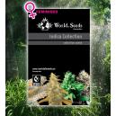Indica Collection 8 Semillas Feminizadas