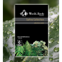 Sativa Collection 20 Semillas Regulares