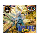 Blue Cheese Big Buddha Seeds