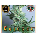 Chiesel Big Buddha Seeds