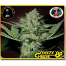 Freeze Cheese 89 Big Buddha Seeds