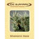 Shamanic Haze De Sjamaan Seeds