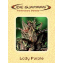 Lady Purple De Sjamaan Seeds