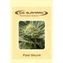 Fast Skunk De Sjamaan Seeds