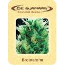 Brainstorm De Sjamaan Seeds