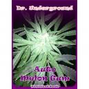Auto Melon Gum Dr.Underground Seeds