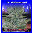 Brooklyn Mango Dr.Underground Seeds