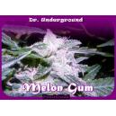 Melon Gum Dr.Underground Seeds