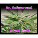 U-Pink Kush Dr.Underground Seeds