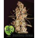 Jamaican Dream Eva Seeds