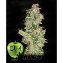 Nexus Eva Seeds