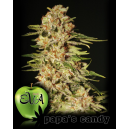 Papa´s Candy Eva Seeds