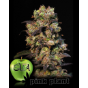 Pink Plant Eva Seeds