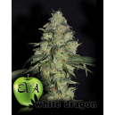 White Dragon Eva Seeds